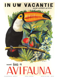 Avifauna Bird Park: Holland c1951