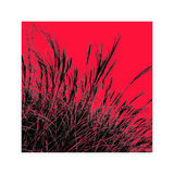 Grass (red)  c2011