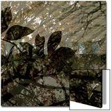 Végétaux 13  c2008