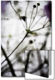 Végétal / 4174  c2008