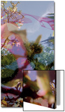 Végétaux 11  c2008
