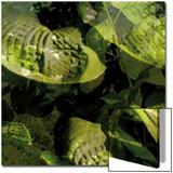 Végétaux 14  c2008