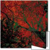 Végétaux 12  c2008