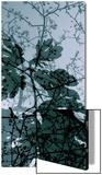 Végétaux 17  c2008