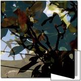 Végétaux 15  c2008