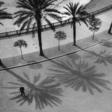Palms on the 'Quai Des Etats Unis' in Nice  1932