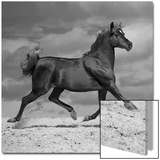 Cheval noir Acrylique par Llovet