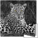 Portrait de léopard Acrylique par Ortega