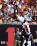 Chad Johnson Cincinnati Bengals -Backward Catch Autographed Photo (Hand Signed Collectable)