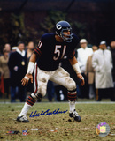 Dick Butkus Chicago Bears - Ready to Tackle Autographed Photo (Hand Signed Collectable)