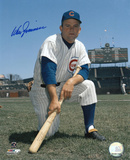 Don Zimmer Chicago Cubs Autographed Photo (Hand Signed Collectable)