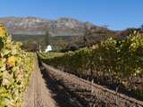 Buitenverwachting Wine Farm  Constantia  Cape Province  South Africa  Africa