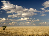 The Dead-Flat Grasslands of the Barkly Tablelands  Northern Territory  Australia  Pacific