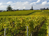 Vineyards  St Emilion  Gironde  France  Europe