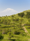 Path Leading to Mount Ararat  Armenia  Caucasus  Central Asia  Asia
