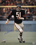 Dick Butkus Chicago Bears Action Autographed Photo (Hand Signed Collectable)