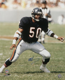 Mike Singletary Chicago Bears Autographed Photo (Hand Signed Collectable)