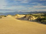 Sand Dunes  St Helens Conservation Area  St Helens  Tasmania  Australia  Pacific