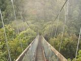 Swingbridge  Motu Falls  Motu  Gisborne  North Island  New Zealand  Pacific