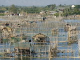 Fish Pens in Channel Through Wetlands at South End of Lingayen Gulf  Philippines