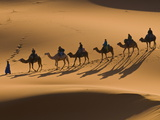 Camels in the Dunes  Merzouga  Morocco  North Africa  Africa