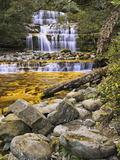 Liffey Falls  UNESCO World Heritage Site  Tasmania  Australia  Pacific
