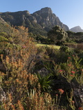 Kirstenbosch National Botanical Garden  Cape Town  South Africa  Africa