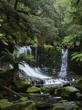 Horseshoe Falls  Mount Field National Park  UNESCO World Heritage Site  Tasmania  Australia
