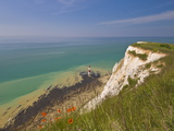 Beachy Head Lighthouse  White Chalk Cliffs  Poppies and English Channel  East Sussex  England  Uk