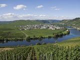 Vineyards Bordering the Banks of the River Mosel  Germany  Europe