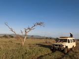 Lualenyi Game Reserve  Kenya  East Africa  Africa