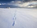 Footsteps in Freshly-Fallen Snow Leading Off Into Distance Towards Dramatic Winter Sky  England