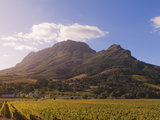 Zorgvliet Wine Estate  Stellenbosch  Cape Province  South Africa  Africa