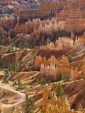 Backlit Sandstone Hoodoos in Bryce Amphitheater  Bryce Canyon National Park  Utah  USA