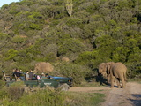 Tourists in Safari Vehicle Looking at Elephant  Kariega Game Reserve  South Africa