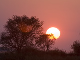 Sunrise  Busanga Plains  Kafue National Park  Zambia  Africa