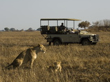 Tourist Taking Pictures of Lioness and Cub  Busanga Plains  Kafue National Park  Zambia  Africa
