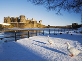 Ducks Walking in the Snow  Caerphilly Castle  Caerphilly  Gwent  Wales  United Kingdom  Europe