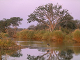 Olifants River  Kruger National Park  South Africa  Africa