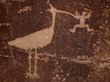 Bird Petroglyph  Petrified Forest National Park  Arizona  United States of America  North America