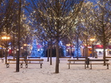 Christmas Decoration at Old Town Square's Park at Twilight  Stare Mesto  Prague  Czech Republic