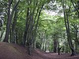 Ambresbury Banks  Epping Forest  Essex  England  United Kingdom  Europe