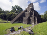 Turkeys at a Pyramid in the Mayan Ruins of Tikal  UNESCO World Heritage Site  Guatemala