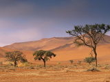 Red Sand Dunes Rising Up to 300M  Sossusvlei Valley in Namib-Naukluft Park  Namibia  Africa