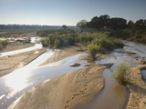 Olifants River  Kruger National Park  South Africa  Africa