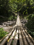 Bamboo Bridge at Dark View Falls  St Vincent and the Grenadines  Windward Islands