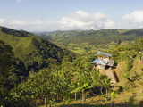 Finca Don Eduardo  Coffee Farm  Salento  Colombia  South America