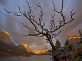 Bare Tree at Sunrise  St Mary Lake  Glacier National Park  Montana  USA