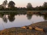 Crocodile Resting on Bank of Kwai River in Moremi Game Reserve  Okavango Delta  Botswana  Africa