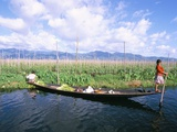 Onion Floating Fields  Inle Lake  Shan State  Myanmar (Burma)  Asia